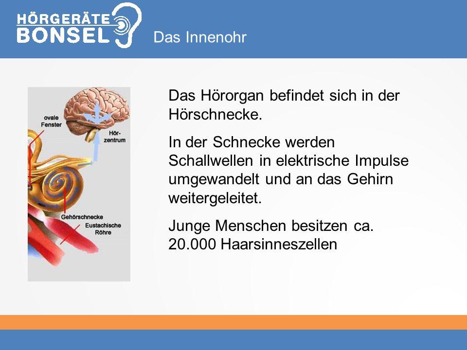Das Hörorgan befindet sich in der Hörschnecke.