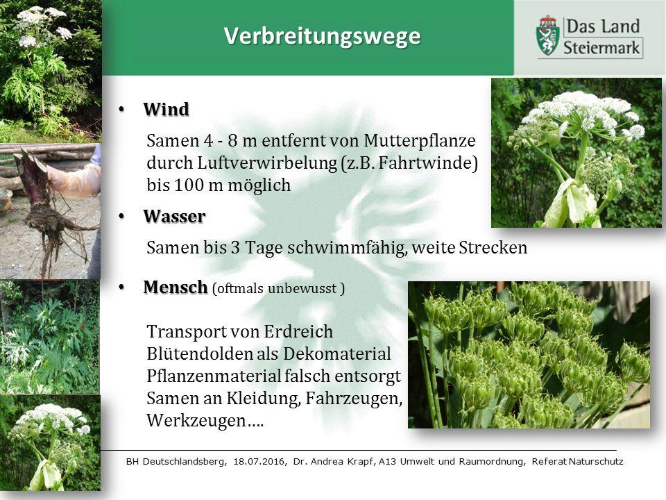 BH Deutschlandsberg, 18.07.2016, Dr. Andrea Krapf, A13 Umwelt und Raumordnung, Referat Naturschutz Verbreitungswege Wind Wind Samen 4 - 8 m entfernt v