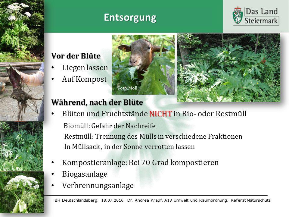 BH Deutschlandsberg, 18.07.2016, Dr. Andrea Krapf, A13 Umwelt und Raumordnung, Referat Naturschutz Entsorgung Vor der Blüte Liegen lassen Auf Kompost
