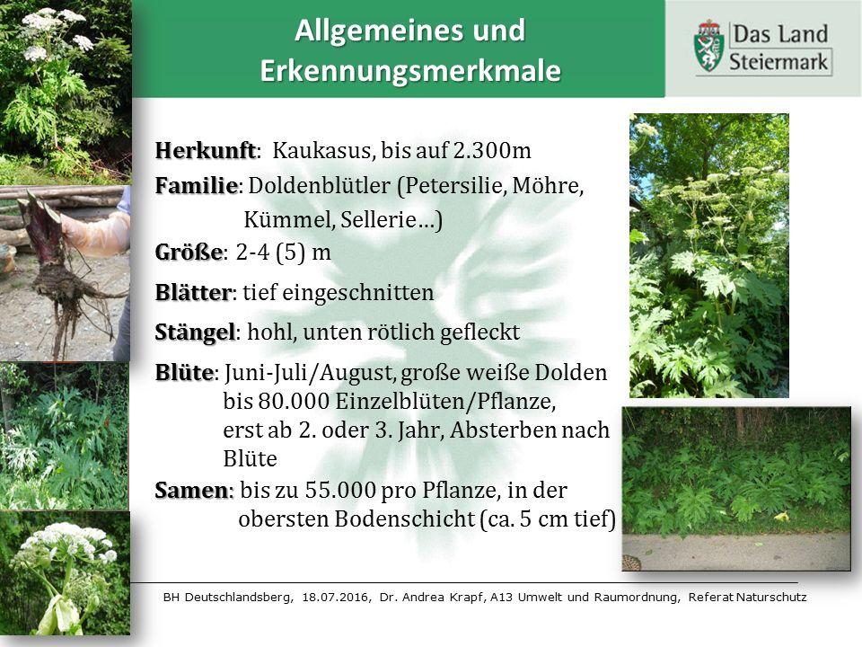BH Deutschlandsberg, 18.07.2016, Dr. Andrea Krapf, A13 Umwelt und Raumordnung, Referat Naturschutz Allgemeines und Erkennungsmerkmale Herkunft Herkunf