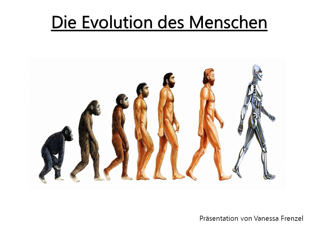 Gliederung ● Definition ● Stammbaum ● → Weg zum Vormensch ● → Weg zum Urmensch ● → Weg vom Frühmensch zum Jetztmensch ● Vergleich Affe-Mensch