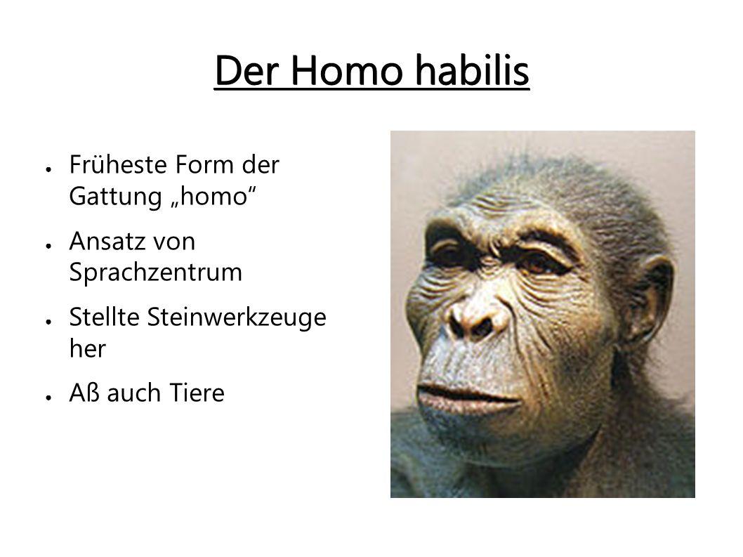 Weg vom Frühmensch zum Jetzmensch Der Homo erectus ● Ging vollkommen aufrecht ● Schädel ähnelte noch dem eines Affen ● Größe: bis zu 1,68m ● Lebten und jagten in Gruppen ● Bauten Hütten ● Nutze das Feuer