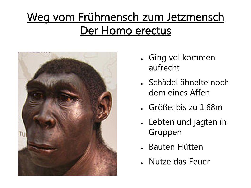 Der Neandertaler (Homo sapiens neanderthalensis) ● Knochen fester und schwerer ● Gewicht: bis zu 100kg ● Konnte Kleidung und Hütten herstellen ● Half Verletzen Artgenossen ● Plant Jagd in großen Gruppen Sehr umstritten, dass der Neandertaler Vorfahre des Homo sapiens ist