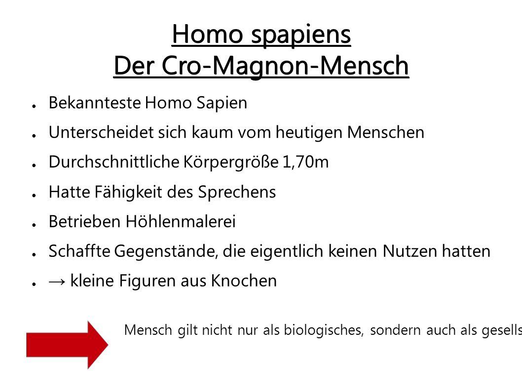 Homo spapiens Der Cro-Magnon-Mensch ● Bekannteste Homo Sapien ● Unterscheidet sich kaum vom heutigen Menschen ● Durchschnittliche Körpergröße 1,70m ●