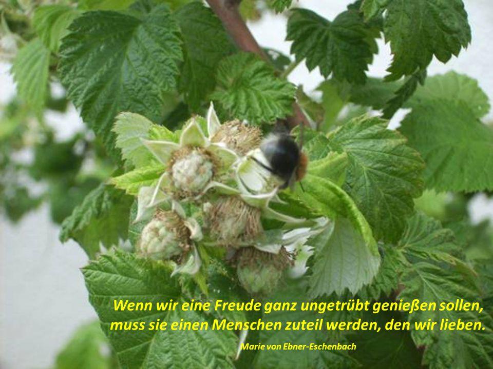 Es ist mit der Liebe wie mit den Pflanzen: Wer Liebe ernten will, muss Liebe säen.