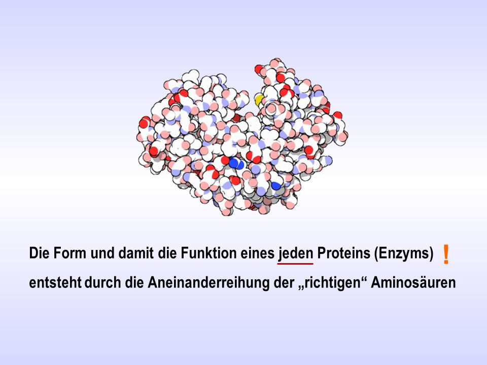 """Die Form und damit die Funktion eines jeden Proteins (Enzyms) entsteht durch die Aneinanderreihung der """"richtigen Aminosäuren !"""
