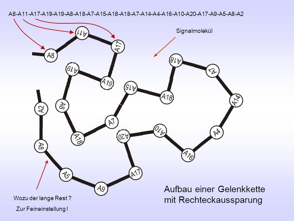 Aufbau einer Gelenkkette mit Rechteckaussparung Signalmolekül A8-A11-A17-A19-A19-A8-A18-A7-A15-A18-A18-A7-A14-A4-A16-A10-A20-A17-A9-A5-A8-A2 Wozu der