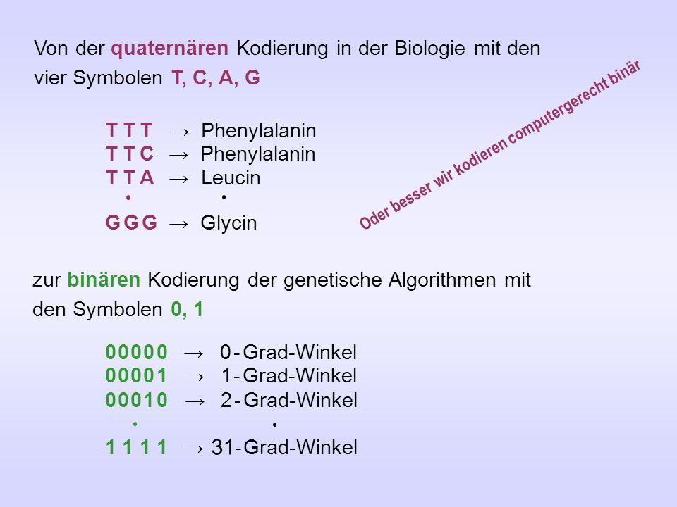 Von der quaternären Kodierung in der Biologie mit den vier Symbolen T, C, A, G T T T → Phenylalanin T T C → Phenylalanin T T A → Leucin G G G → Glycin zur binären Kodierung der genetische Algorithmen mit den Symbolen 0, 1 0 0 0 0 0 → 0 - Grad-Winkel 0 0 0 0 1 → 1 - Grad-Winkel 0 0 0 1 0 → 2 - Grad-Winkel 1 1 1 1 → 31 - Grad-Winkel Oder besser wir kodieren computergerecht binär