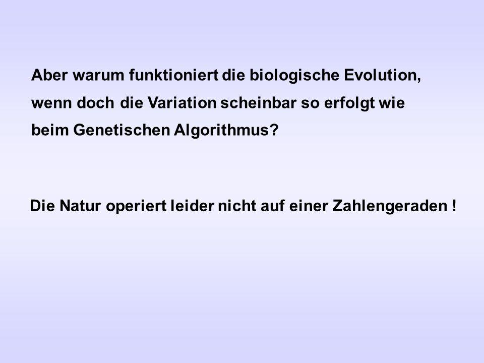 Aber warum funktioniert die biologische Evolution, wenn doch die Variation scheinbar so erfolgt wie beim Genetischen Algorithmus? Die Natur operiert l