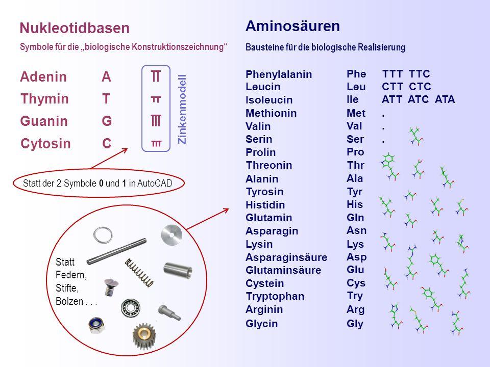 """Nukleotidbasen Adenin Thymin Guanin Cytosin A T G C Symbole für die """"biologische Konstruktionszeichnung"""" Aminosäuren Phenylalanin Leucin Isoleucin Met"""