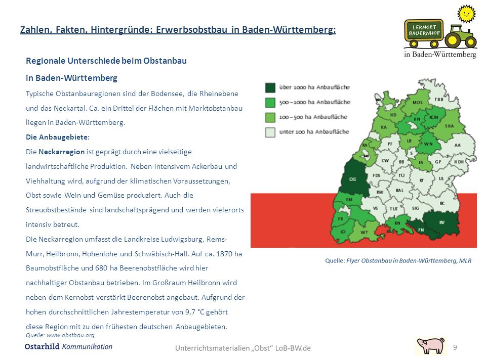 Regionale Unterschiede beim Obstanbau in Baden-Württemberg Typische Obstanbauregionen sind der Bodensee, die Rheinebene und das Neckartal. Ca. ein Dri