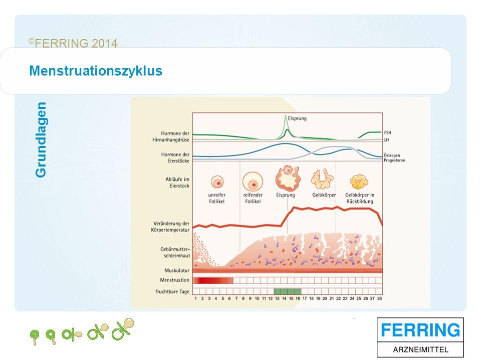 © FERRING 2014 Menstruationszyklus Grundlagen