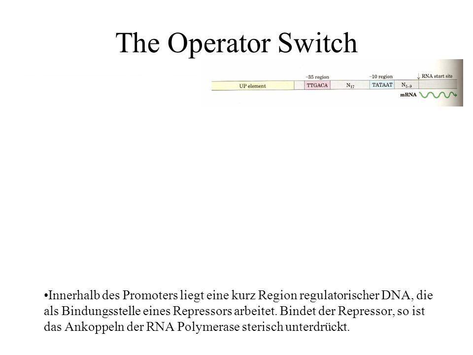 The Operator Switch Innerhalb des Promoters liegt eine kurz Region regulatorischer DNA, die als Bindungsstelle eines Repressors arbeitet.