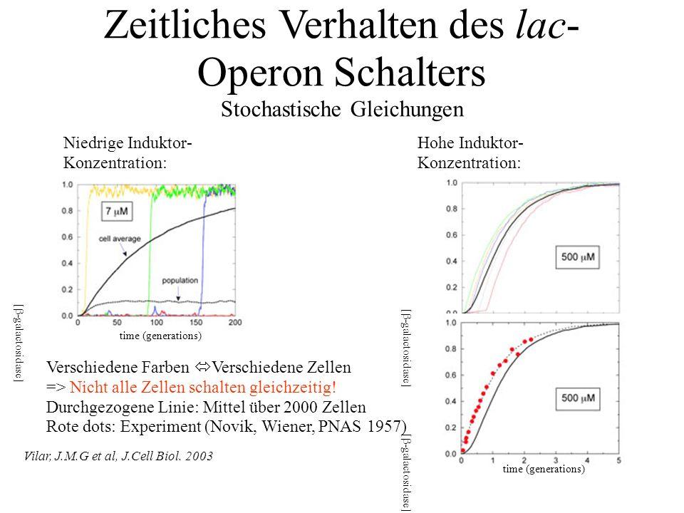 Zeitliches Verhalten des lac- Operon Schalters Stochastische Gleichungen Vilar, J.M.G et al, J.Cell Biol.