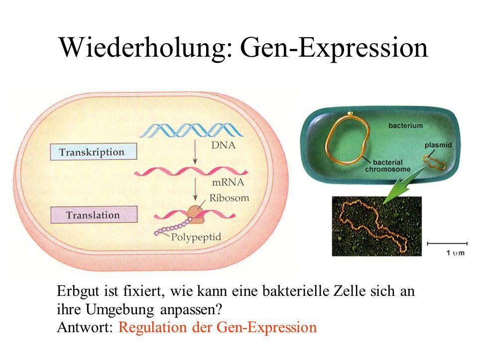 Wiederholung: Gen-Expression Erbgut ist fixiert, wie kann eine bakterielle Zelle sich an ihre Umgebung anpassen.