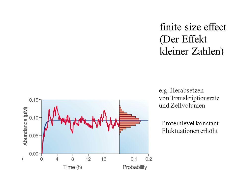 finite size effect (Der Effekt kleiner Zahlen) e.g.