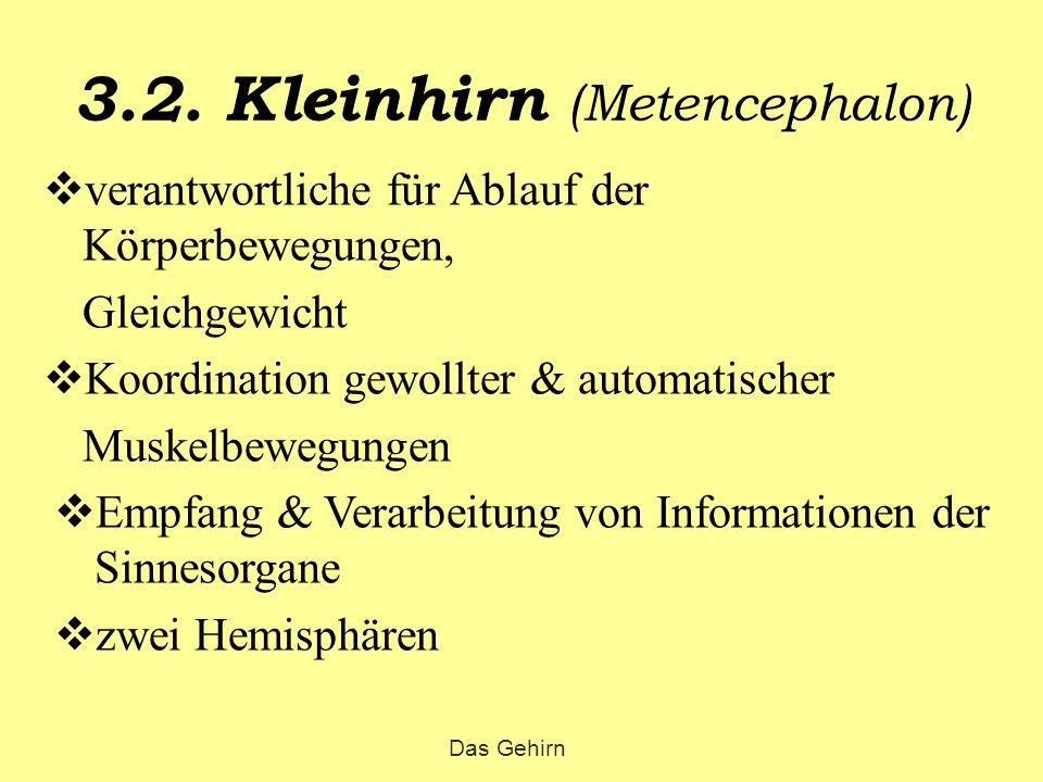 3.2. Kleinhirn (Metencephalon)  verantwortliche für Ablauf der Körperbewegungen, Gleichgewicht  Koordination gewollter & automatischer Muskelbewegun