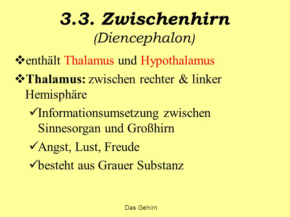 3.3. Zwischenhirn ( Diencephalon )  enthält Thalamus und Hypothalamus  Thalamus: zwischen rechter & linker Hemisphäre Informationsumsetzung zwischen