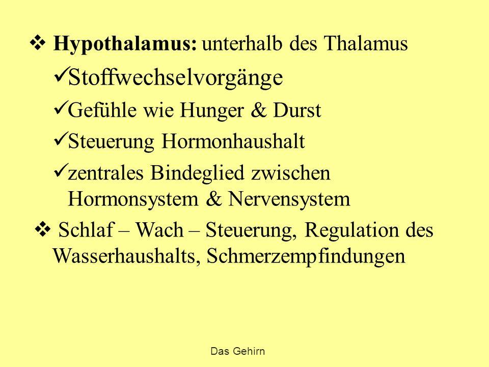  Hypothalamus: unterhalb des Thalamus Stoffwechselvorgänge Gefühle wie Hunger & Durst Steuerung Hormonhaushalt zentrales Bindeglied zwischen Hormonsy