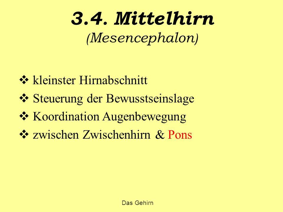 3.4. Mittelhirn ( Mesencephalon )  kleinster Hirnabschnitt  Steuerung der Bewusstseinslage  Koordination Augenbewegung  zwischen Zwischenhirn & Po