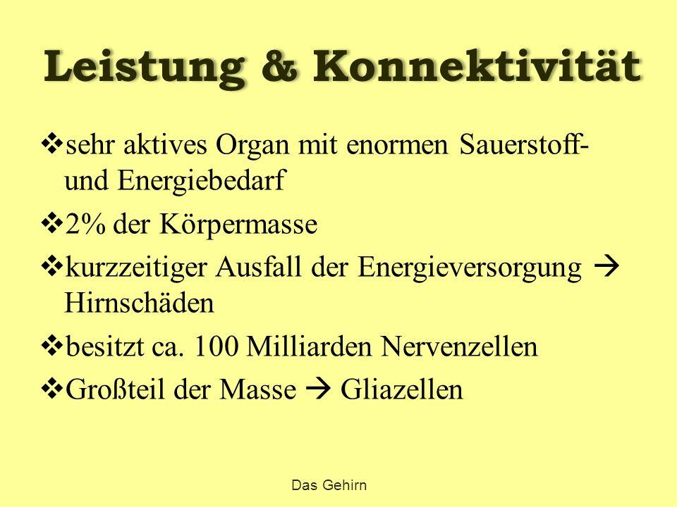 Leistung & Konnektivität  sehr aktives Organ mit enormen Sauerstoff- und Energiebedarf  2% der Körpermasse  kurzzeitiger Ausfall der Energieversorg