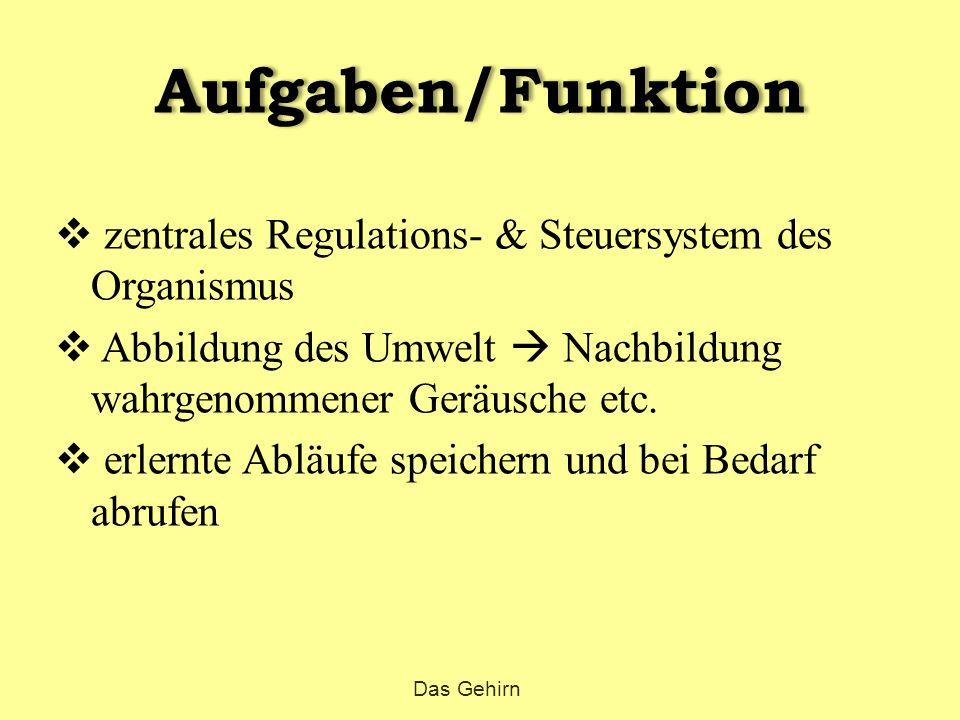 Aufgaben/Funktion  zentrales Regulations- & Steuersystem des Organismus  Abbildung des Umwelt  Nachbildung wahrgenommener Geräusche etc.  erlernte
