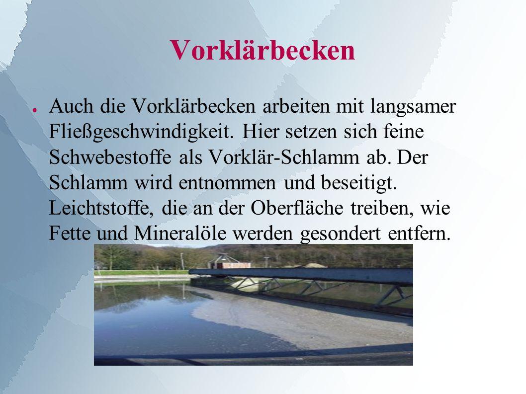 Vorklärbecken ● Auch die Vorklärbecken arbeiten mit langsamer Fließgeschwindigkeit.