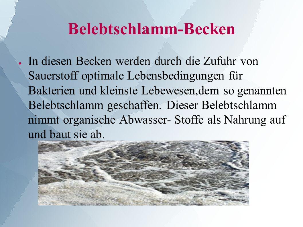 Belebtschlamm-Becken ● In diesen Becken werden durch die Zufuhr von Sauerstoff optimale Lebensbedingungen für Bakterien und kleinste Lebewesen,dem so genannten Belebtschlamm geschaffen.