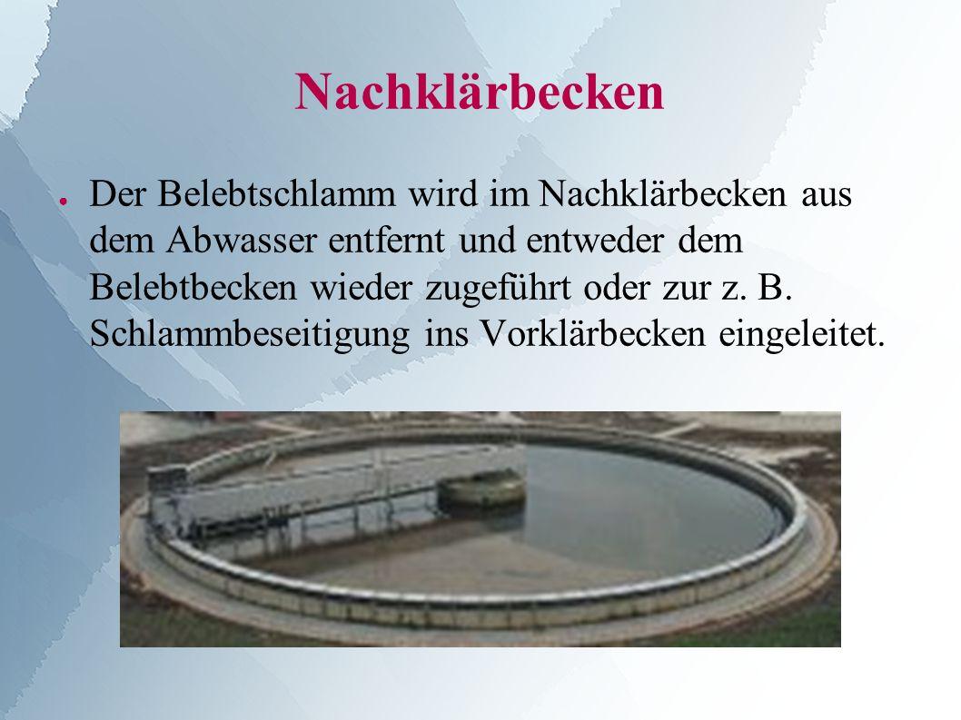 Nachklärbecken ● Der Belebtschlamm wird im Nachklärbecken aus dem Abwasser entfernt und entweder dem Belebtbecken wieder zugeführt oder zur z.