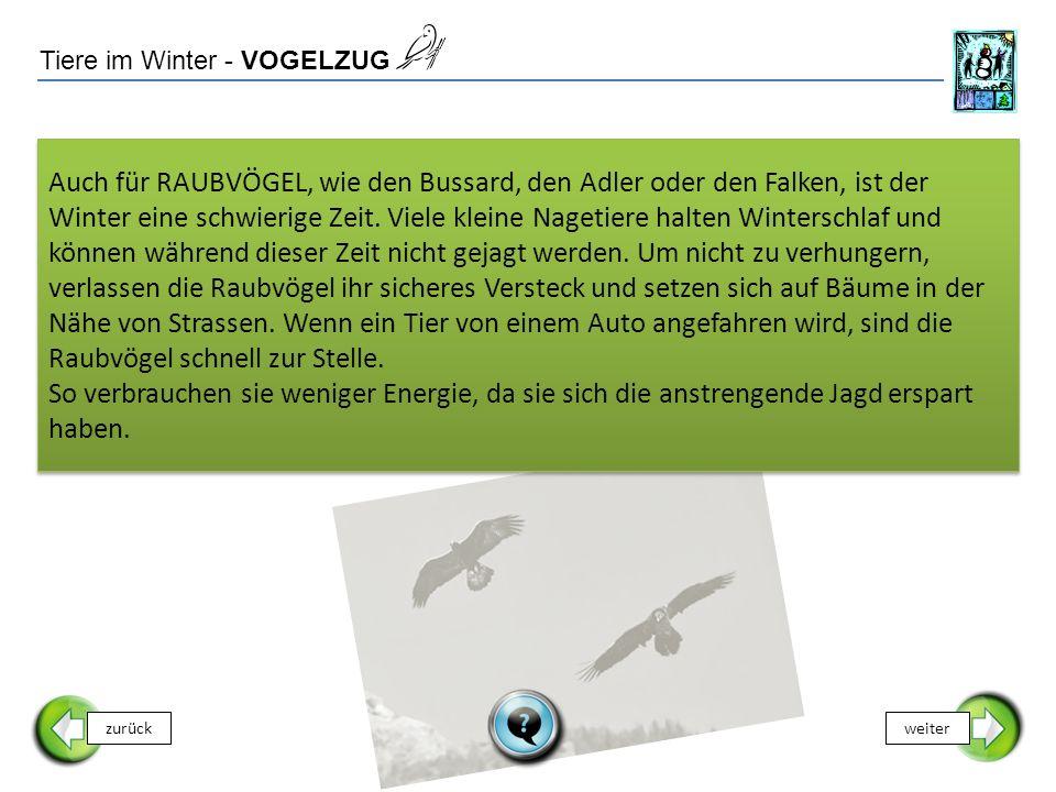 Tiere im Winter - VOGELZUG zurückweiter Auch für RAUBVÖGEL, wie den Bussard, den Adler oder den Falken, ist der Winter eine schwierige Zeit.