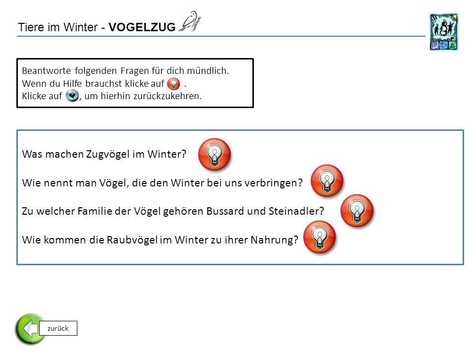 Tiere im Winter - VOGELZUG zurück Beantworte folgenden Fragen für dich mündlich.