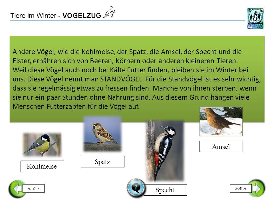 Tiere im Winter - VOGELZUG zurückweiter Andere Vögel, wie die Kohlmeise, der Spatz, die Amsel, der Specht und die Elster, ernähren sich von Beeren, Körnern oder anderen kleineren Tieren.
