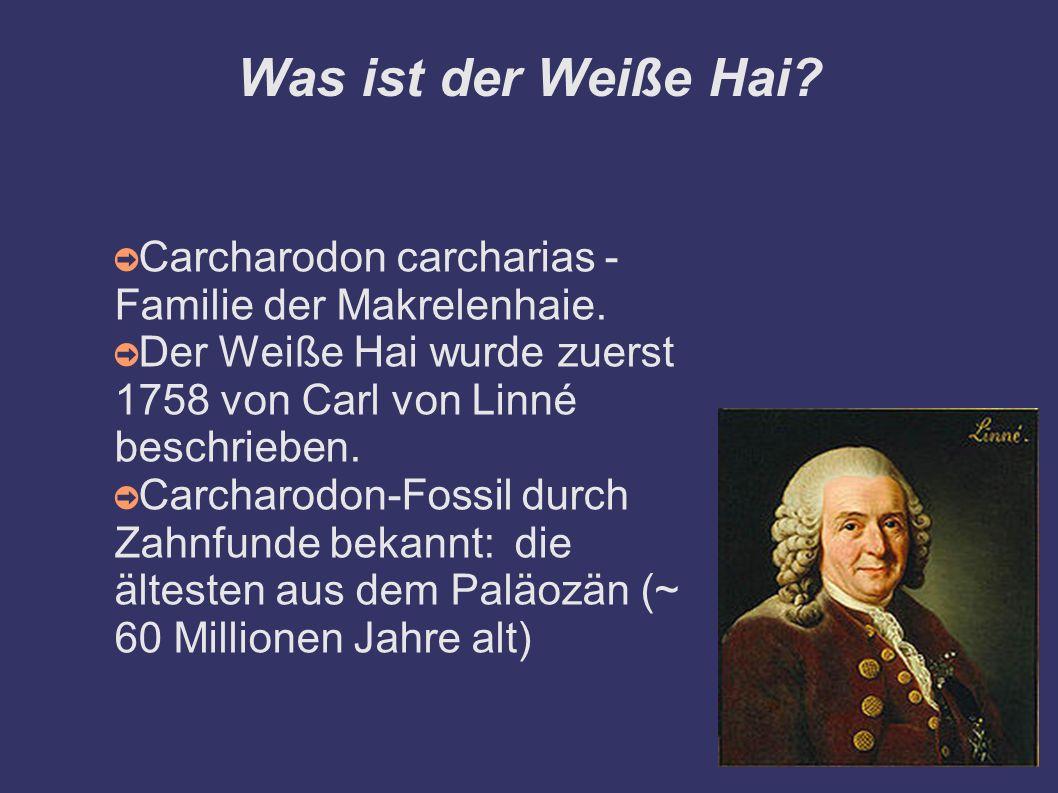 Was ist der Weiße Hai? ➲ Carcharodon carcharias - Familie der Makrelenhaie. ➲ Der Weiße Hai wurde zuerst 1758 von Carl von Linné beschrieben. ➲ Carcha