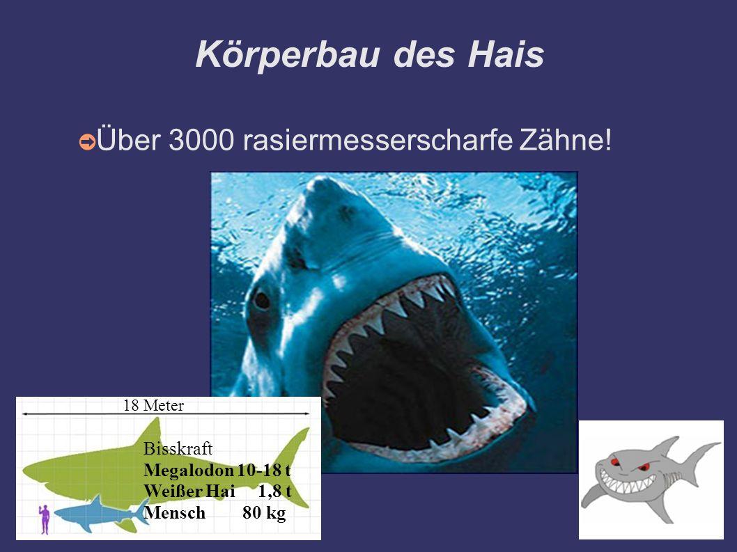 Körperbau des Hais ➲ Über 3000 rasiermesserscharfe Zähne! 18 Meter Bisskraft Megalodon 10-18 t Weißer Hai 1,8 t Mensch 80 kg