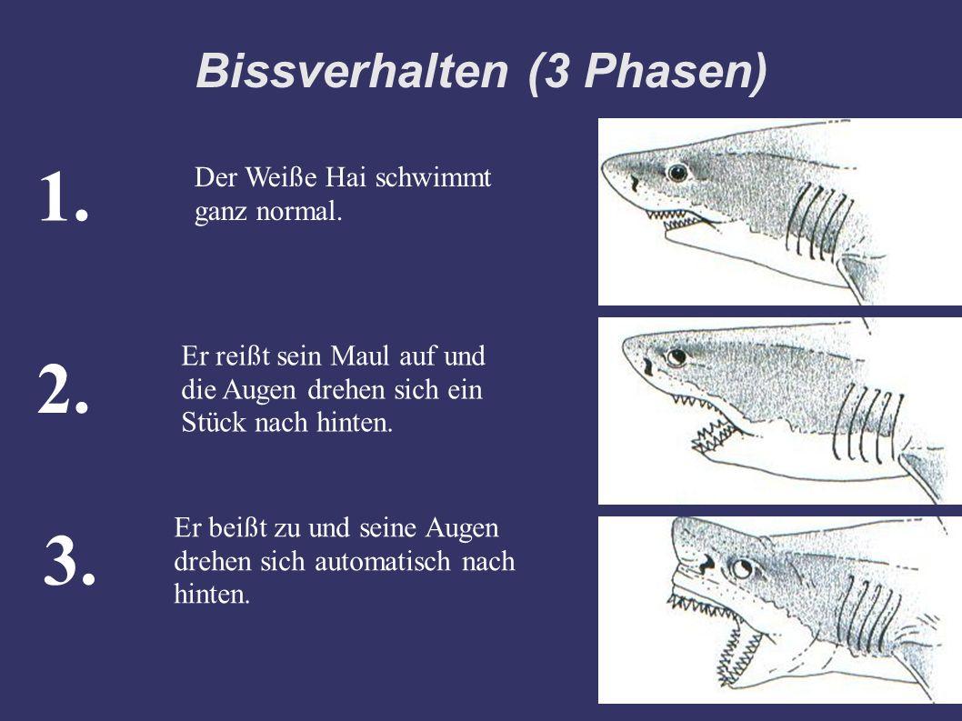 Bissverhalten (3 Phasen) Der Weiße Hai schwimmt ganz normal. Er reißt sein Maul auf und die Augen drehen sich ein Stück nach hinten. 1. 2. Er beißt zu