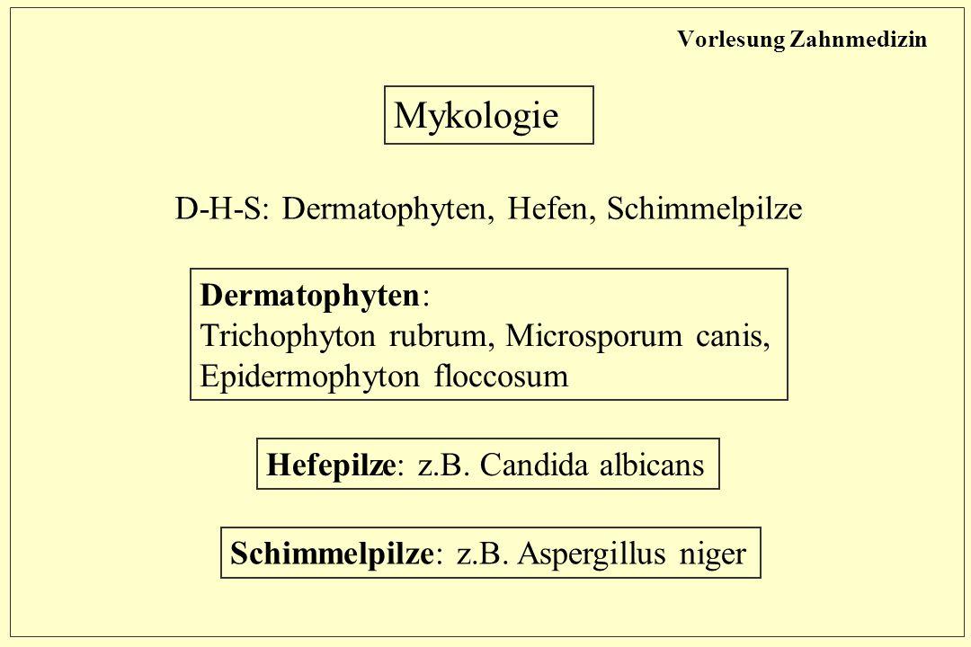 Vorlesung Zahnmedizin Mykologie D-H-S: Dermatophyten, Hefen, Schimmelpilze Dermatophyten: Trichophyton rubrum, Microsporum canis, Epidermophyton floccosum Hefepilze: z.B.