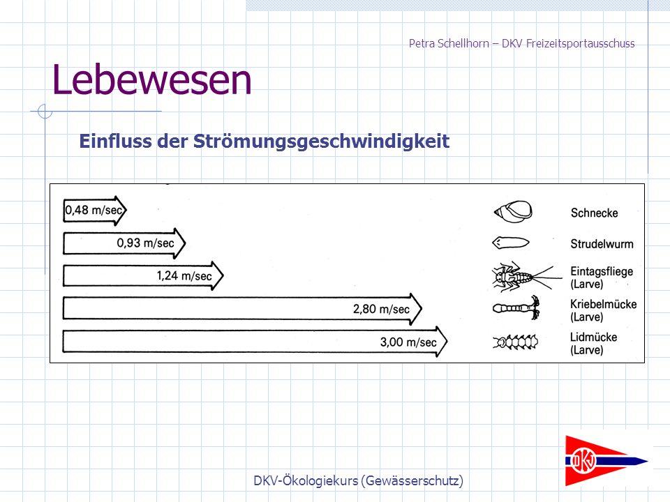 DKV-Ökologiekurs (Gewässerschutz) Lebewesen Einfluss der Strömungsgeschwindigkeit Petra Schellhorn – DKV Freizeitsportausschuss