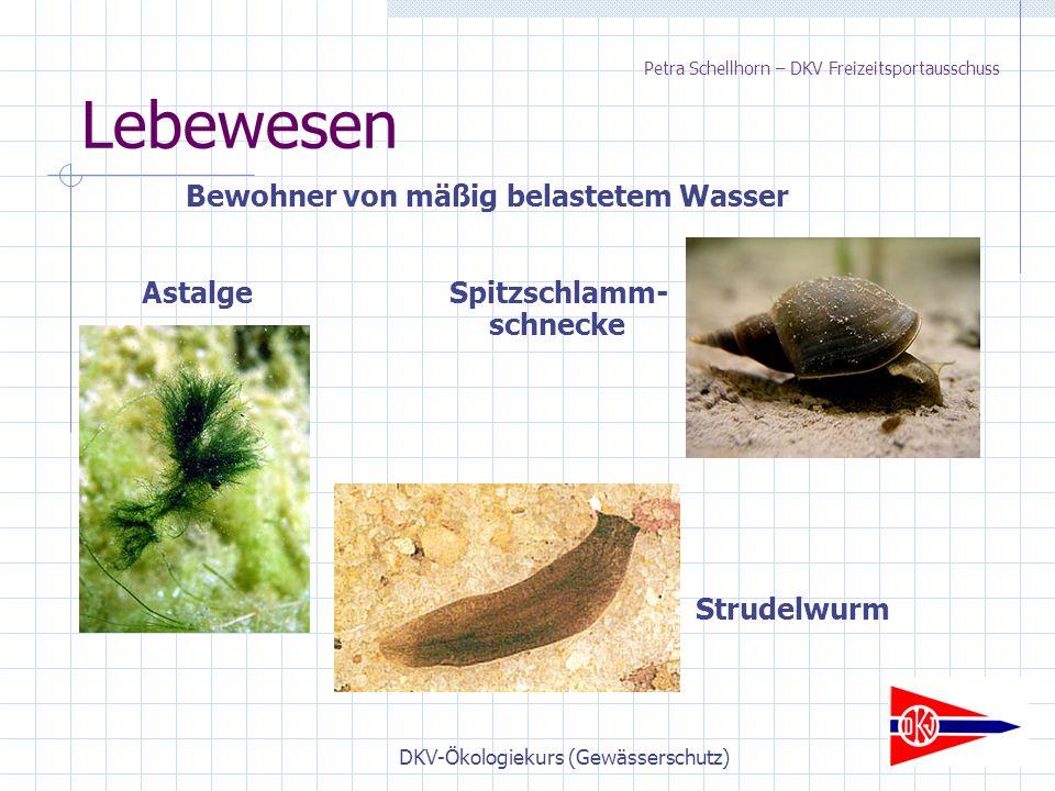 DKV-Ökologiekurs (Gewässerschutz) Lebewesen Bewohner von mäßig belastetem Wasser AstalgeSpitzschlamm- schnecke Strudelwurm Petra Schellhorn – DKV Freizeitsportausschuss