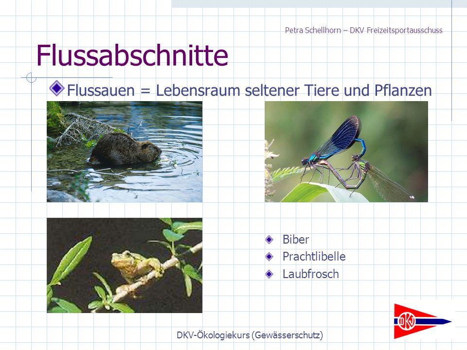 DKV-Ökologiekurs (Gewässerschutz) Flussabschnitte Flussauen = Lebensraum seltener Tiere und Pflanzen Biber Prachtlibelle Laubfrosch Petra Schellhorn – DKV Freizeitsportausschuss