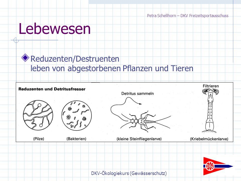 DKV-Ökologiekurs (Gewässerschutz) Lebewesen Reduzenten/Destruenten leben von abgestorbenen Pflanzen und Tieren Petra Schellhorn – DKV Freizeitsportausschuss