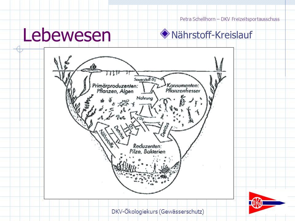 DKV-Ökologiekurs (Gewässerschutz) Lebewesen Nährstoff-Kreislauf Petra Schellhorn – DKV Freizeitsportausschuss