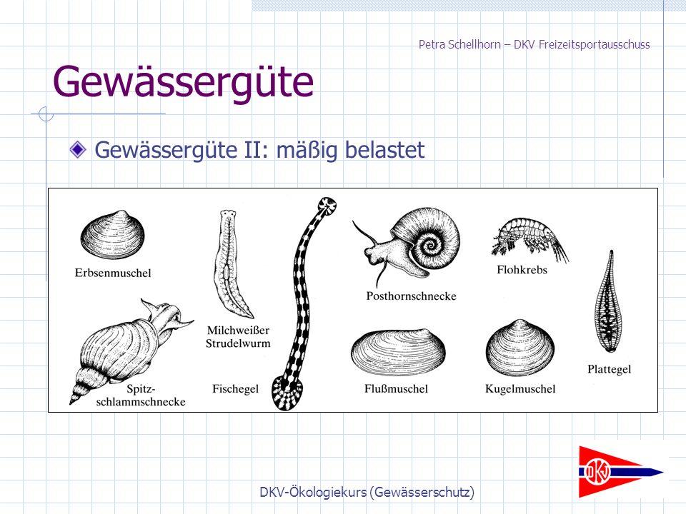 DKV-Ökologiekurs (Gewässerschutz) Gewässergüte Gewässergüte II: mäßig belastet Petra Schellhorn – DKV Freizeitsportausschuss
