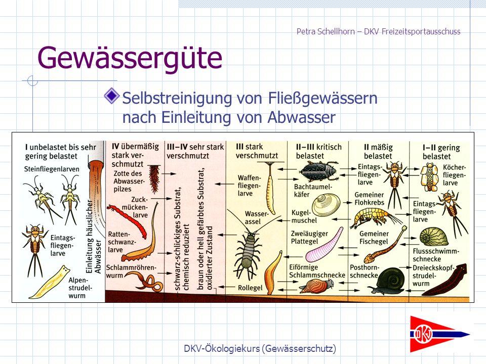 DKV-Ökologiekurs (Gewässerschutz) Gewässergüte Selbstreinigung von Fließgewässern nach Einleitung von Abwasser Petra Schellhorn – DKV Freizeitsportausschuss
