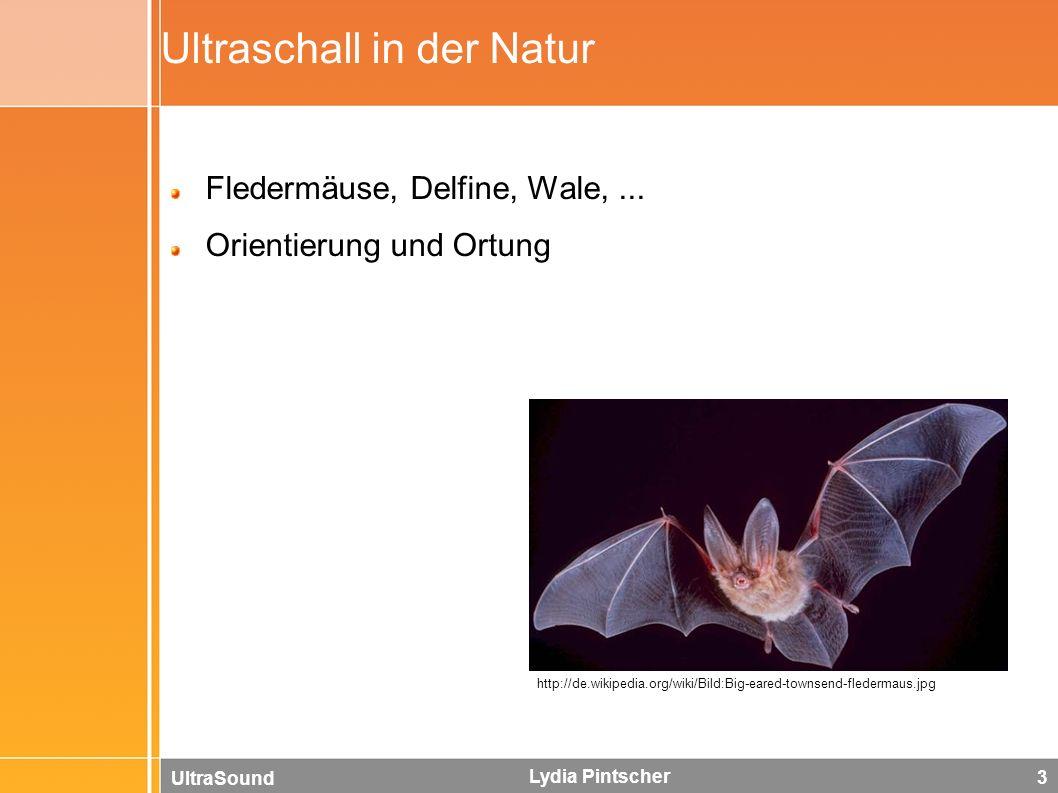 UltraSound Lydia Pintscher 3 Ultraschall in der Natur Fledermäuse, Delfine, Wale,... Orientierung und Ortung http://de.wikipedia.org/wiki/Bild:Big-ear
