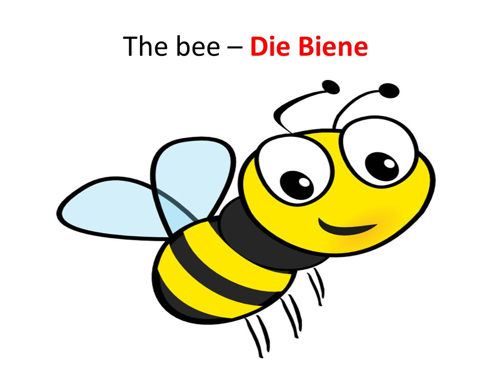 The bee – Die Biene