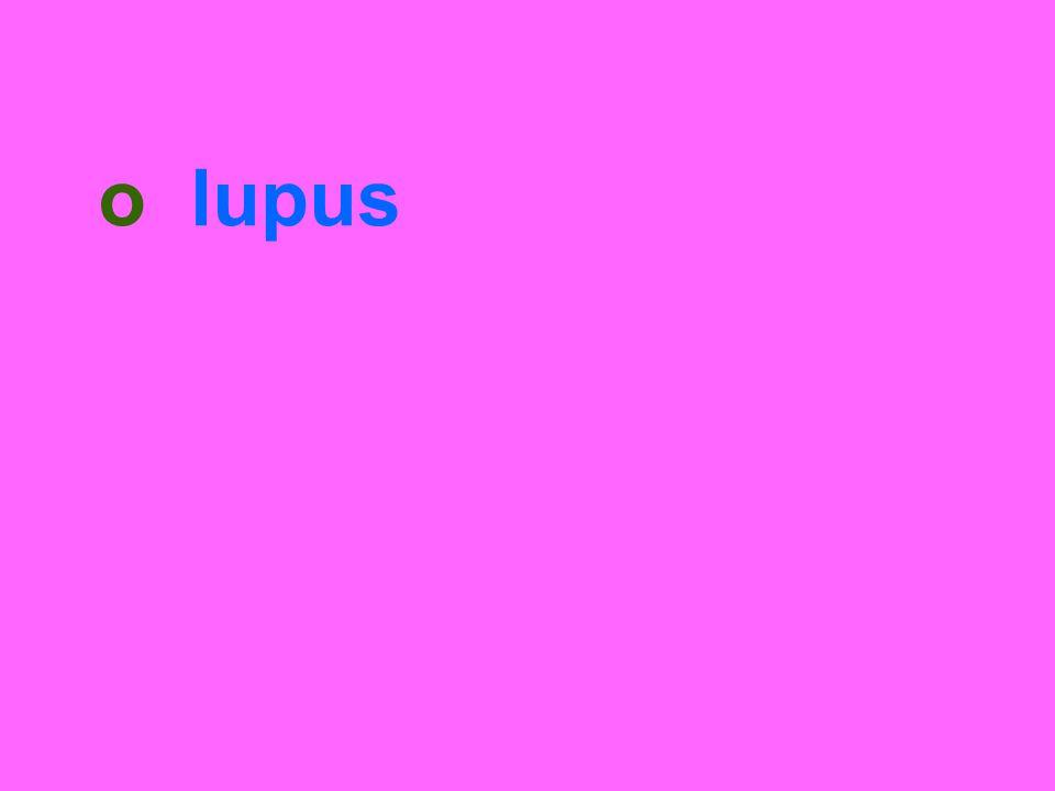 o lupus