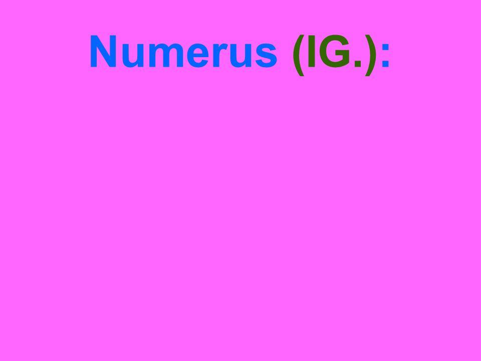 Numerus (IG.):
