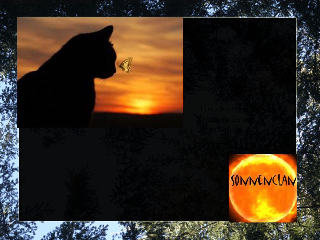Wir vom SonnenClan Sind die Nachkommen einer Gruppe Abtrünniger Katzen aus dem DonnerClan.