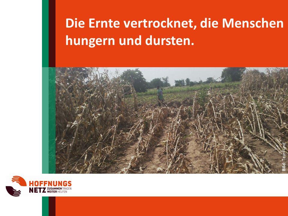 Die Ernte vertrocknet, die Menschen hungern und dursten. Bild: AVC Bild: TearFund