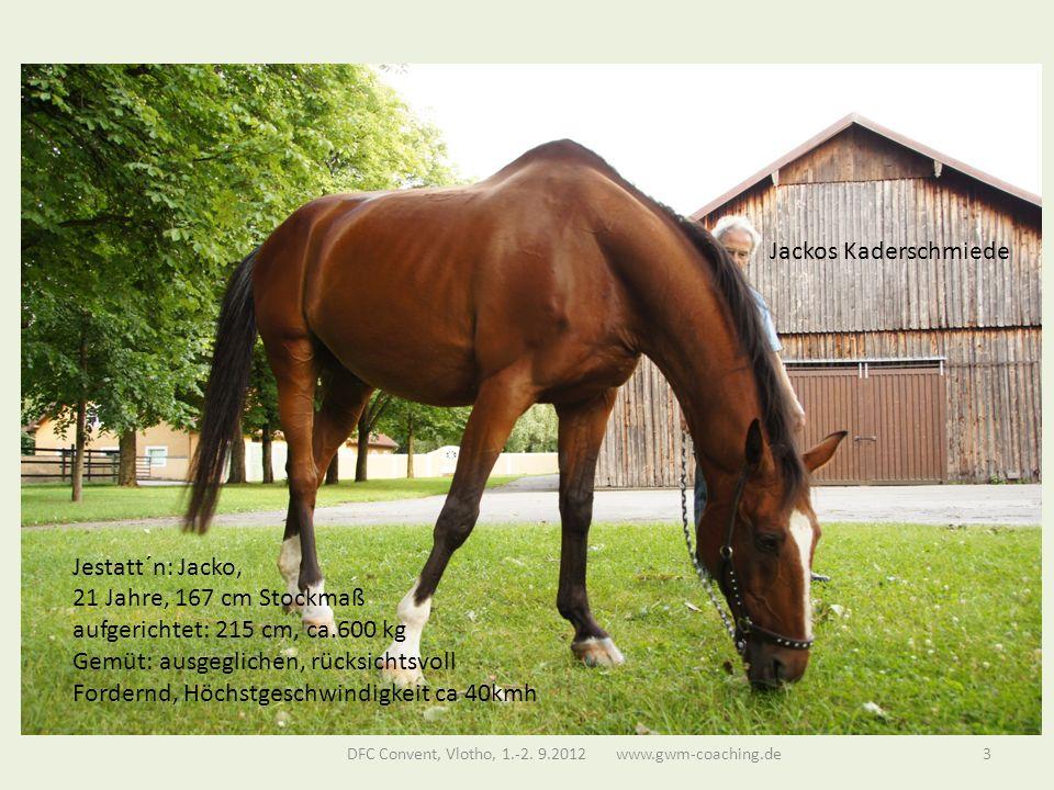 Jackos Kaderschmiede Jestatt´n: Jacko, 21 Jahre, 167 cm Stockmaß aufgerichtet: 215 cm, ca.600 kg Gemüt: ausgeglichen, rücksichtsvoll Fordernd, Höchstgeschwindigkeit ca 40kmh DFC Convent, Vlotho, 1.-2.